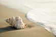Leinwandbild Motiv Conch shell on beach  with waves.
