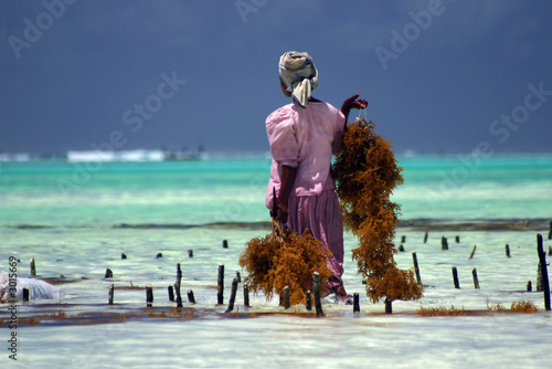 Foto op Canvas Zanzibar work for life