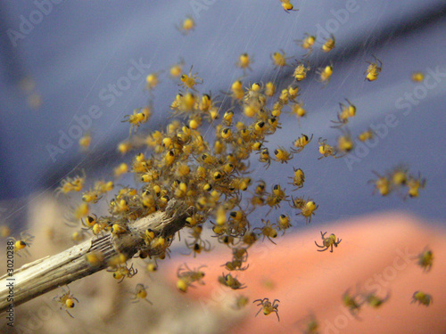 Photo 0974 - nid d'araignées