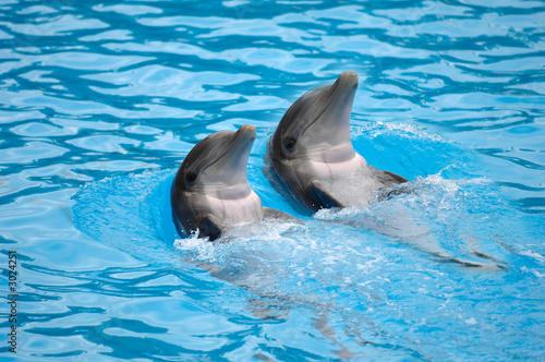 dolephin race - 3024251