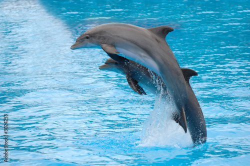 dolphins jumping - 3024253