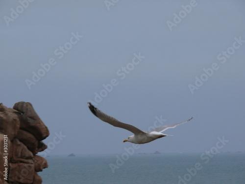 Fotografie, Obraz  l'envol de l'albatros