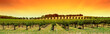canvas print picture - vineyard panorama sunset