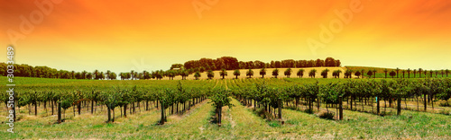 Spoed Foto op Canvas Australië vineyard panorama sunset