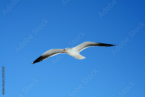 Fotografija  Albatross flying against blue sky