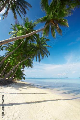 Foto-Kissen - sea palms (von Dmitry Ersler)