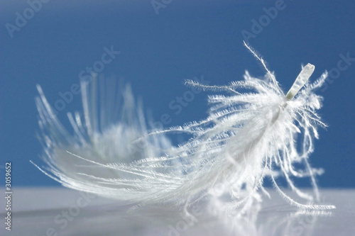 fluffy white feather on blue background