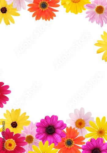daisy frame Lerretsbilde