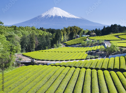 Foto op Canvas Japan green tea fields iv
