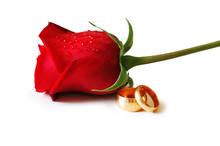Two Golden Wedding  Rings And A Red Rose