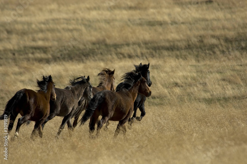 Photo  wild horses running in the grass