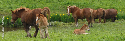 Fotografie, Obraz  chevaux
