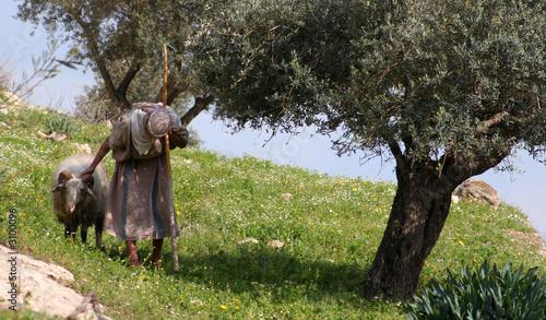 nazareth shepherd Fototapeta