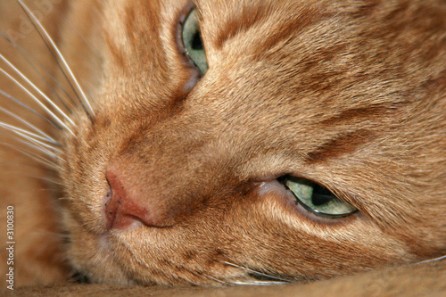 Foto auf Leinwand Katze kat