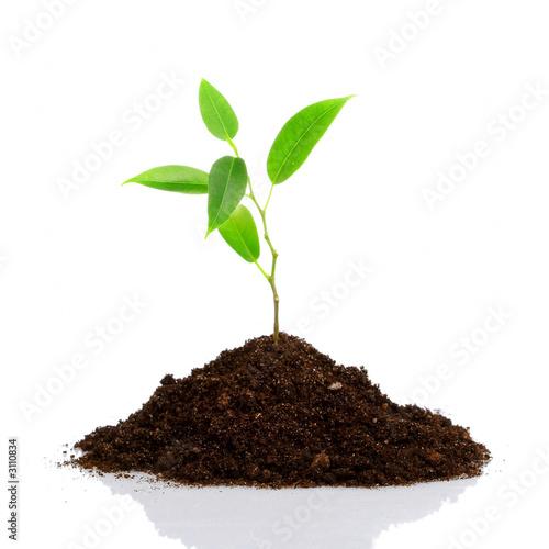 Papiers peints Vegetal young plant