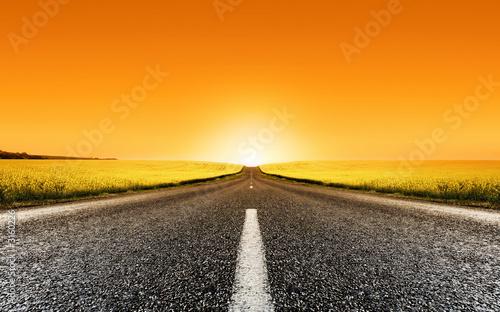 Deurstickers Oranje eclat canola road sunset