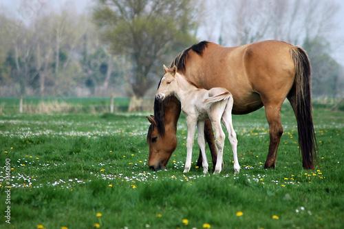 Foto op Plexiglas Paarden deux chevaux