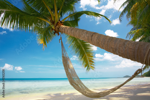 Photo  palm and hammock