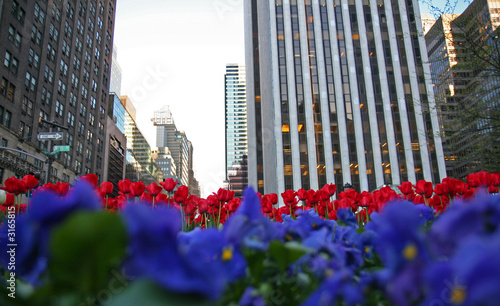 Photo  flowers in the city