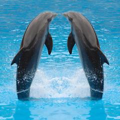 Fototapetadolphin twins