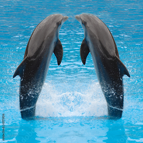 dolphin twins - 3175856