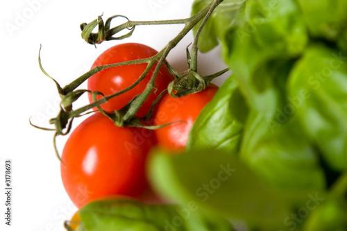Keuken foto achterwand Groenten tomatos like basil