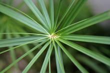 Green Spiral Palm Leaf