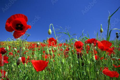 Naklejki na meble   kwiaty