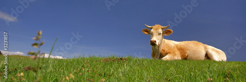 une vache au soleil Fotobehang