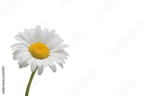Cadres-photo bureau Marguerites weiße margerite