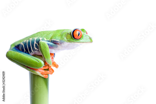 Tuinposter Kikker frog on top of the world