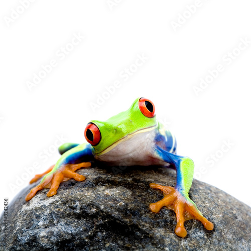 Tuinposter Kikker frog on rock