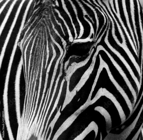 Obraz premium czarny i biały