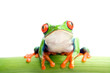 canvas print picture frog on bamboo