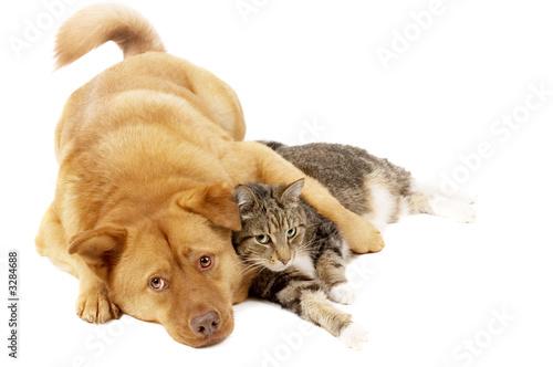 Keuken foto achterwand Kat dog and cat relaxing