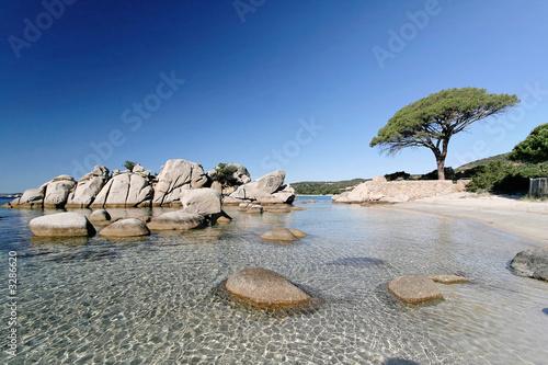 Foto-Leinwand - plage de palombaggia, porto-vecchio