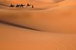 Leinwanddruck Bild camel caravan in the sahara desert