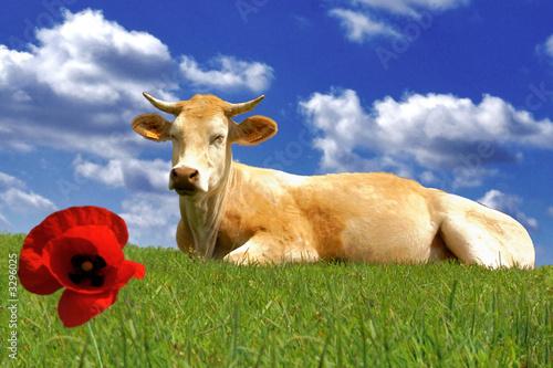 Poster de jardin Vache le coquelicot et la vache