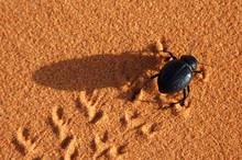 Black Beetle On The Sand
