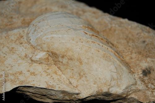 Fototapeta fossile