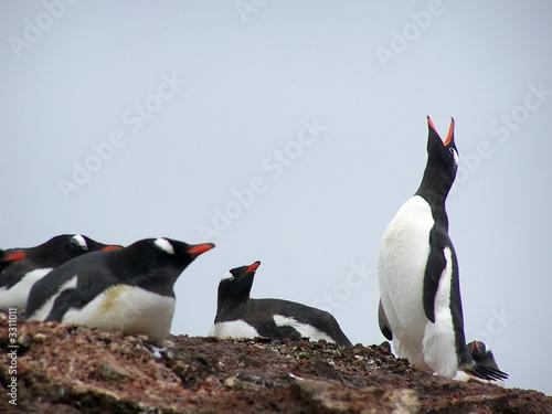 Photo Stands Antarctic antarctic song