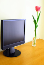 LCD Pannel And Tulip On A Wood...
