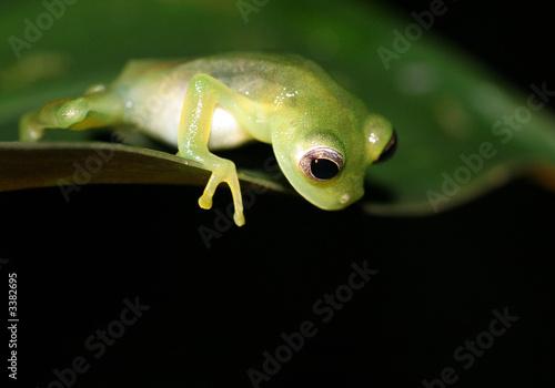 Montage in der Fensternische Frosch neugieriger frosch