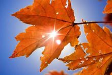 Leafy Sunburst