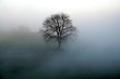 canvas print picture - baum im nebel