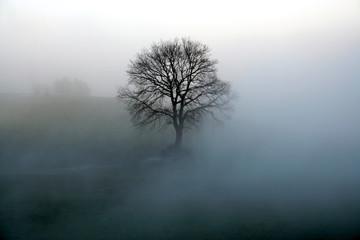 baum im nebel