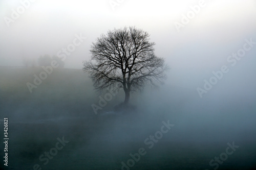 Fototapeta baum im nebel obraz