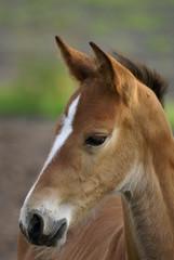 a foal.