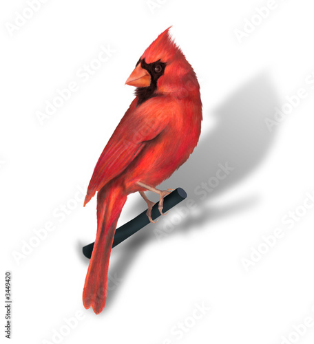 cardinal rouge Canvas Print