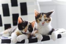 Sister Kittens